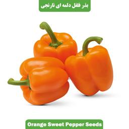 بذر فلفل دلمه ای نارنجی