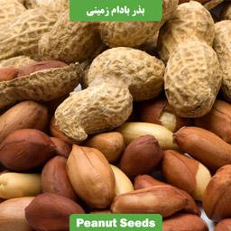 بذر بادام زمینی