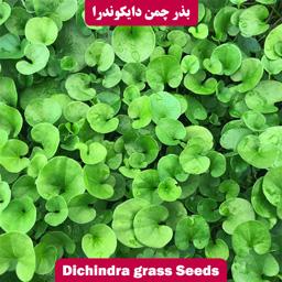 بذر چمن دایکوندرا