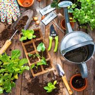 کود رشد برای گل و سبزی