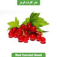 بذر انگور فرنگی قرمز