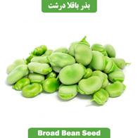 بذر باقلا درشت Broad Bean Seed
